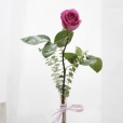 Rosa Individual Fucsia