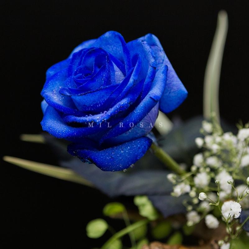 Rosa Individual Azul Milrosas