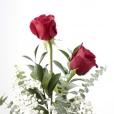 Dos rosas rojas Tú y yo