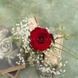 Rosa Individual Rojo Pasión