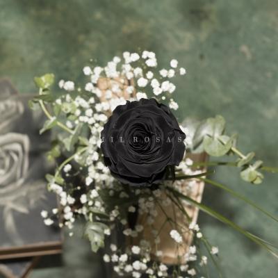 Rosa Individual Negro Puro
