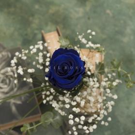 Rosa Individual Azul Intenso (Preservada)