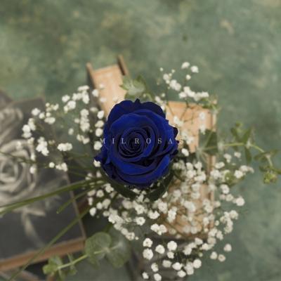 Rosa Individual Azul Intenso