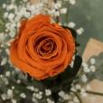 Rosa Individual Naranja Energy