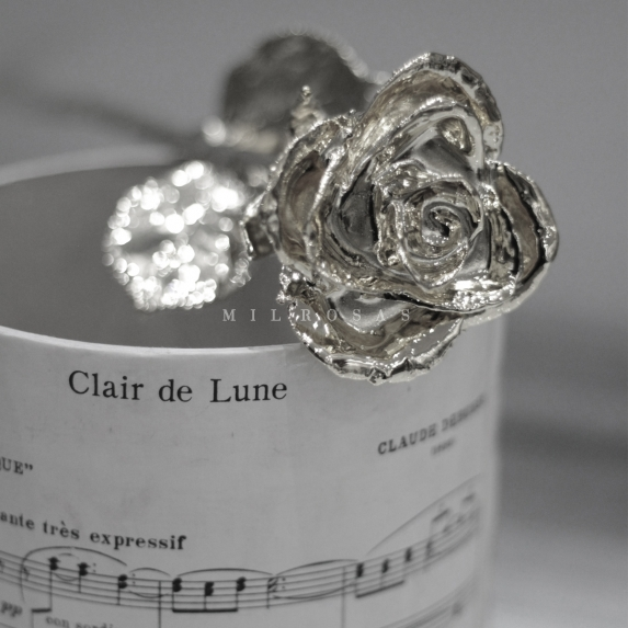 Platinum Rose, Rosa de Platino