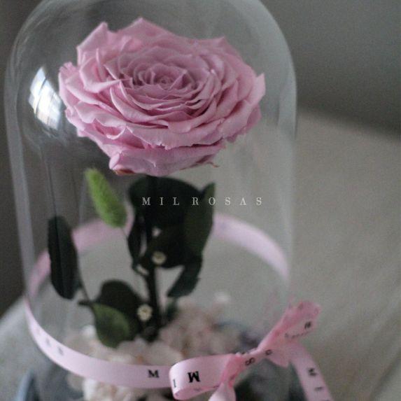Rosa Joya Pink (Bella y Bestia)