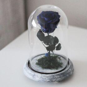 Rosa Joya Azul (Bella y Bestia)